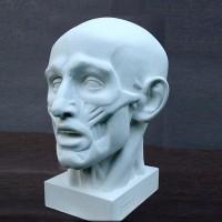 Гипсовая модель Голова экорше 31 см 4 кг (АР-499)