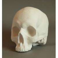 Череп без нижней челюсти для рисунка в классе ИЗО, 18х16х14 см
